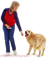 Woman clicker-training Golden Retriever