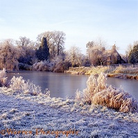 Ockley pond with ice and frost