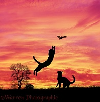 Silhouette cats leaping at a bat