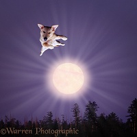 Flying dog over the moon