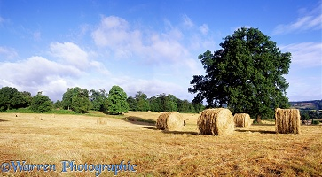 Hay bales in Shere
