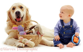 Baby and Retriever with toys