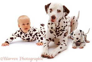 Baby with Dalmatian father and pup
