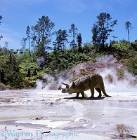 Triceratops in geyser scenery