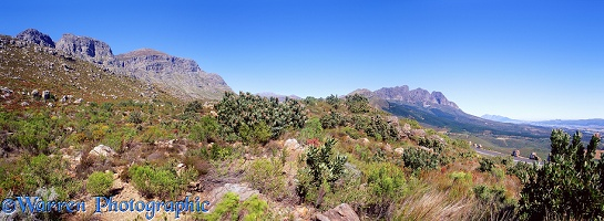 Fynbos and mountains panorama