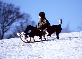 Boy sledging with a dog