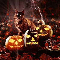 Witch's cat with pumpkins