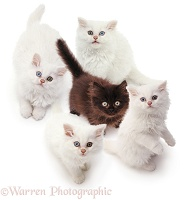 Group of kittens looking up