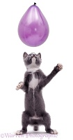 Kitten reaching up at a balloon