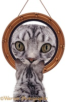 Cat looking at round mirror