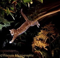 Ginger Cat jumping down long exposure