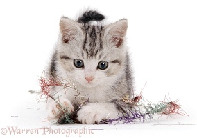 Kitten with tinsel