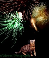 Cat watching fireworks
