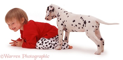 Child and Dalmatian puppy
