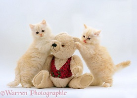 Kittens & teddy bear