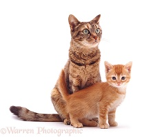 Mother cat and ginger kitten