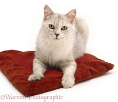 Cat on a red cushion