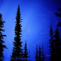 Trees with star swirl