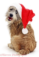 Cheeky dog with Santa hat