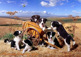 Hay-cart Capers jigsaw