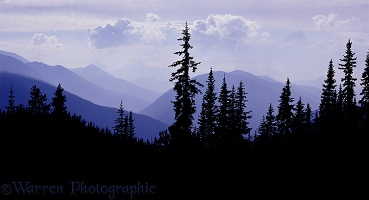 Subalpine Firs and Mt. Hozameen