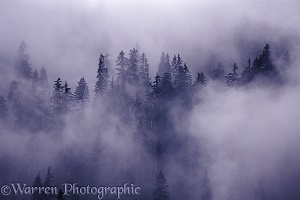 Trees in the clouds