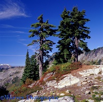 Alpine scenery with Mountain Hemlocks