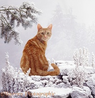 Ginger cat in snow