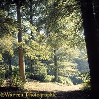 Weston Wood - 4 seasons - Summer
