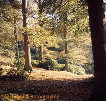 Weston Wood - 4 seasons - Autumn
