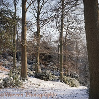 Weston Wood - 4 seasons - Winter