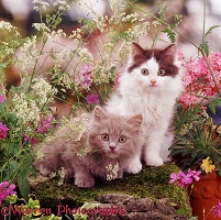 Kittens among late spring flowers