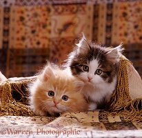 Cute kittens under a cover