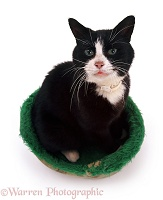 Black-and-white cat sitting in a cat bed