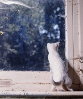 White kitten looking out of a window