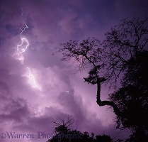 Lightning at Chobe National Park