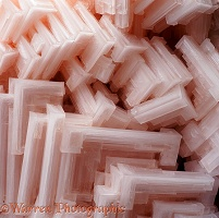 Pink salt crystals