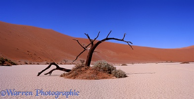 Dead tree at Hidden Vlei