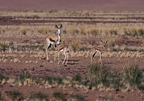 Springbok with kids