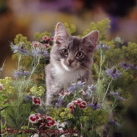 Grey tabby kitten among flowers