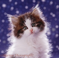Fluffy kitten on starry background