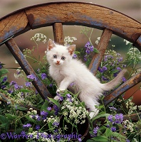 Kitten on old wagon wheel