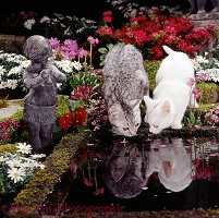Cats drinking at a garden pond