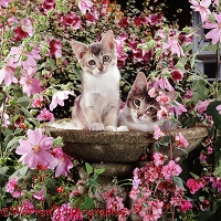 Kittens among flowers