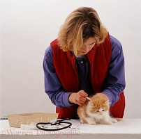 Vet vaccinating and kitten