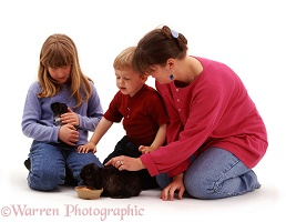 Weaver family with rabbit & Guinea pig