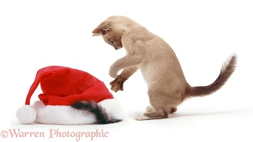 Kittens with Father Christmas hat