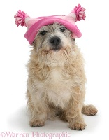 Dog in a pink hat