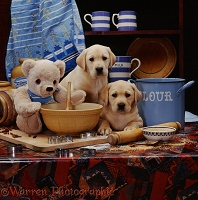 Labrador pups and teddy on table