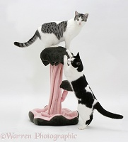 Cats with fancy scratch post